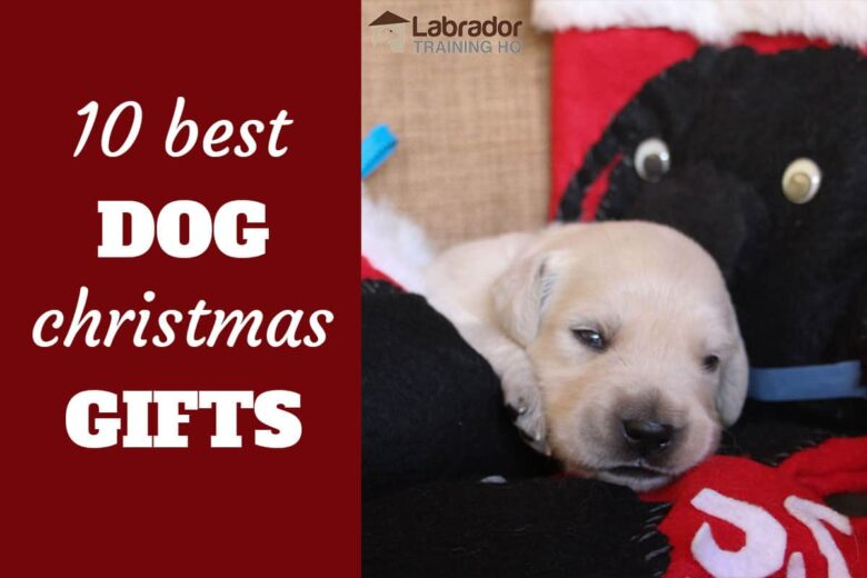 10 Best Dog Christmas Gifts - baby yellow puppy lying on Christmas stocking with black dog images stitched on.