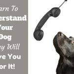 Understanding Your Dog - The Most Valuable Thing You Can Learn To Do