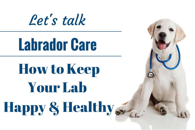 Caring for a Labrador Retriever: A Lab puppy as a vet