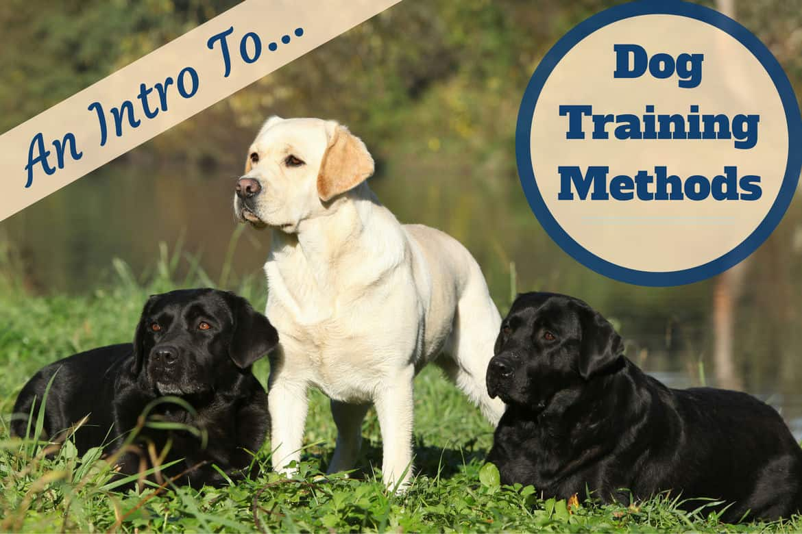 Dog training methods: A yellow lab and 2 blacks in grass by water