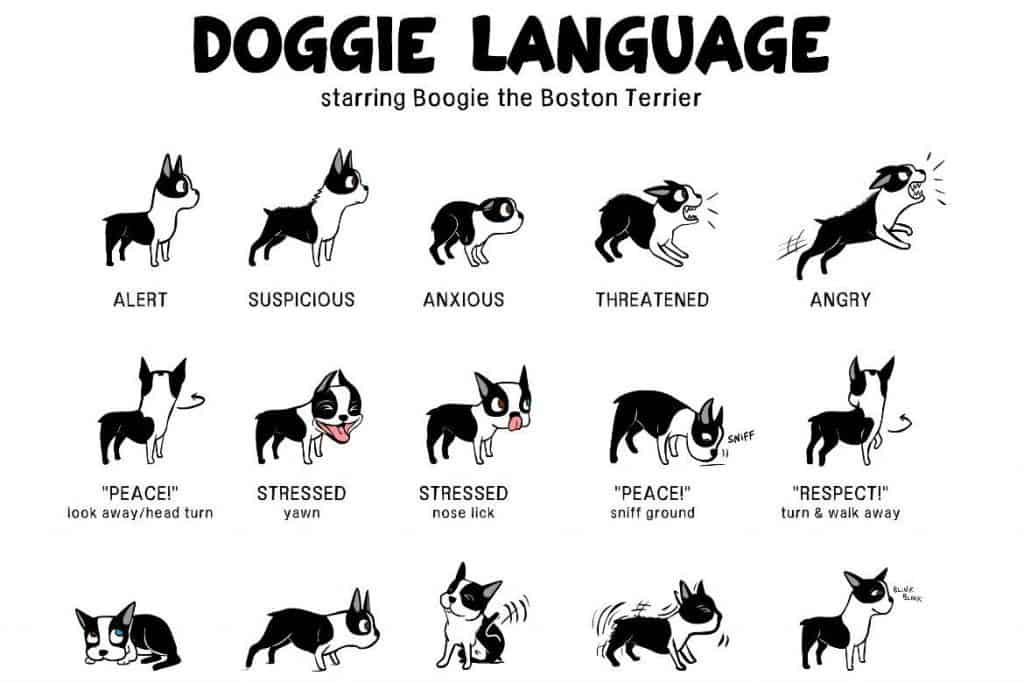 Canine Body Language A Lesson In Understanding Your Labrador