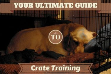 Crate training guide: A labrador happily sleeping in an open crate