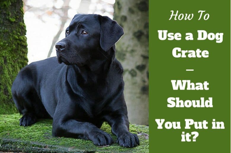 How to use a dog crate - Black labrador laying