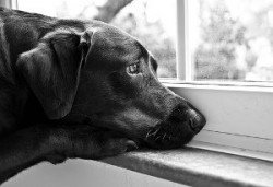 When not to crate your dog - sad dog looking out the window