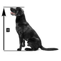 dog breeds alphabetical
