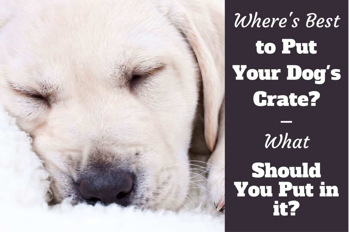 How to Help Your Dog During a Seizure pictures