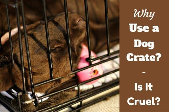 Why use a dog crate - Puppy sleeping in a crate