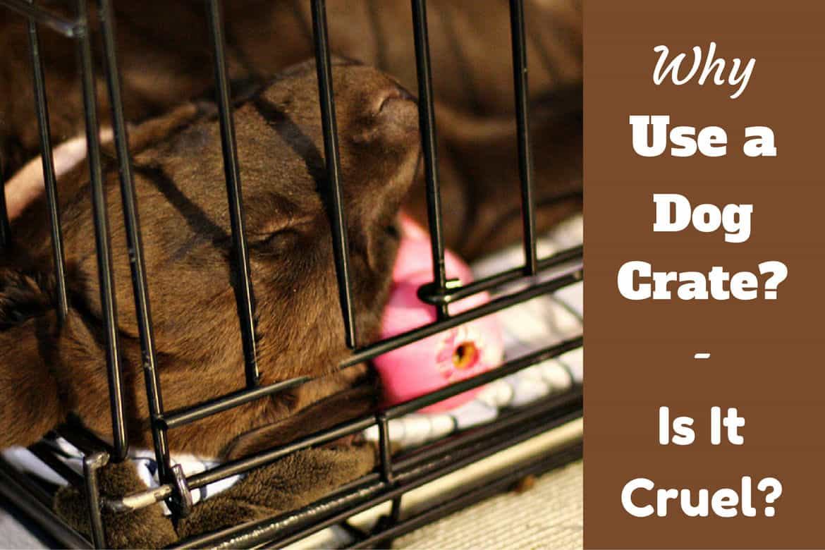 Brand new Why use a dog crate - and is it cruel to crate a dog? DI45