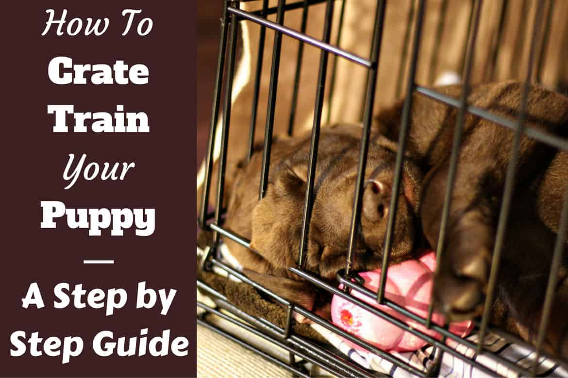 How To Crate Train A Puppy Day Night Even If You Work November 2018