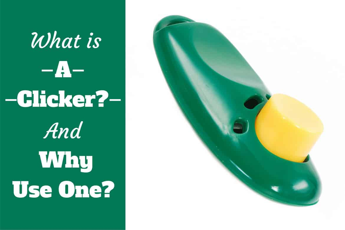 What is a clicker and why use one written beside a green clicker on white bg