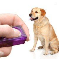 a yellow lab being trained with a clicker on a white background