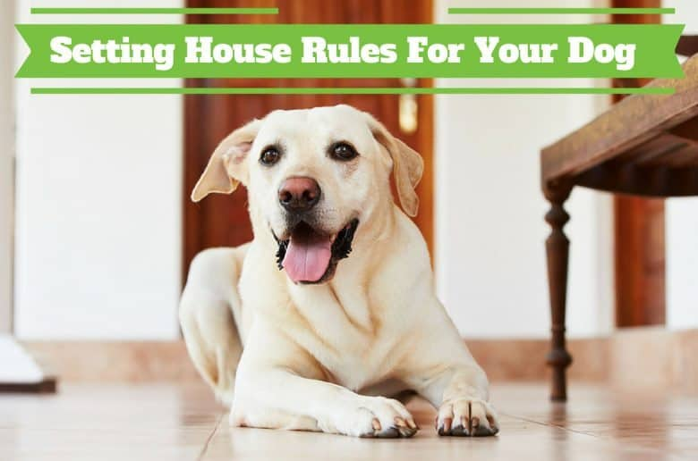 House Rules For Dogs - A Yellow Lab Lab laying on a hallway floor