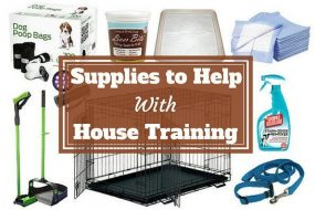 A collection of house training products and supplies