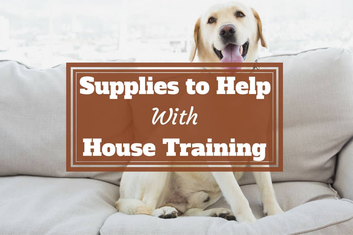 Supplies to help with house training written across a yellow labrador sitting on a sofa