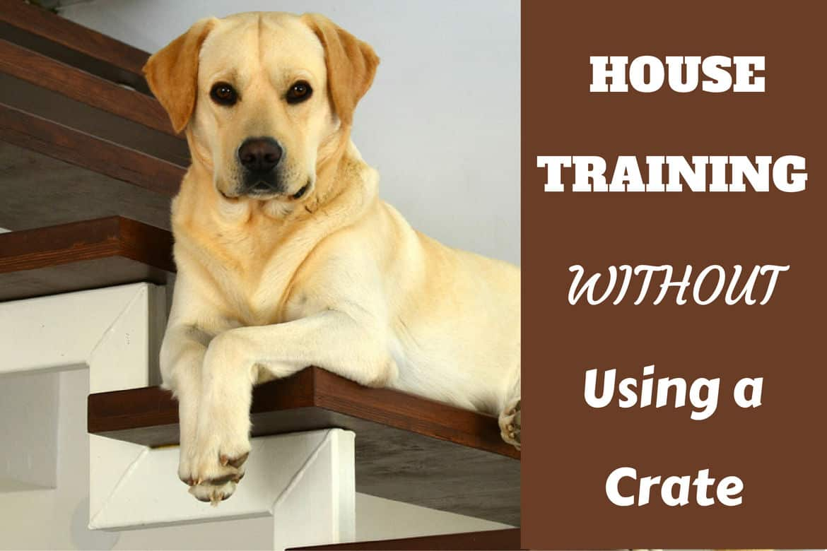 house training without a crate: constant supervision