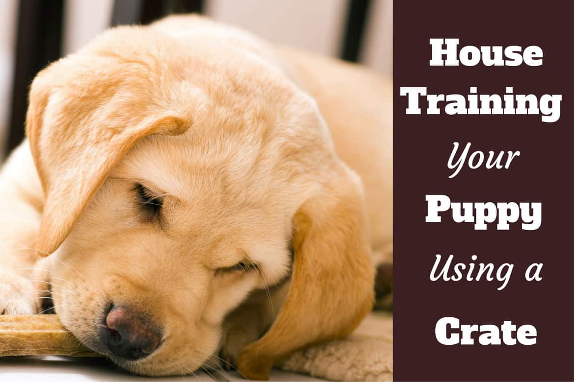 How To Use A Crate To House Train A Puppy | How Do You Potty Train A Dog