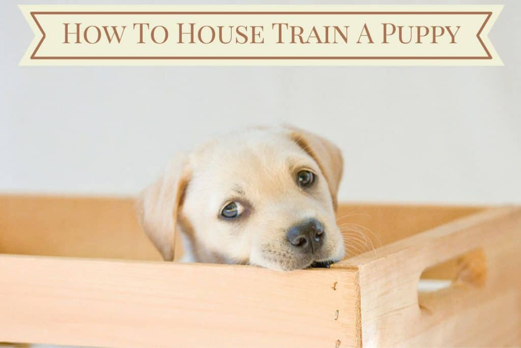 how to train a dog to eat on a schedule