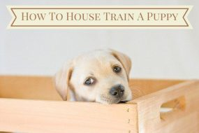 Labrador puppy in crate with how to house train a puppy in a banner above