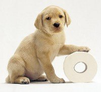 Yellow Labrador puppy with a paw on a toilet roll