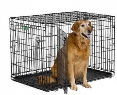Midwest iCrate Pet Crate with dog inside on white bg