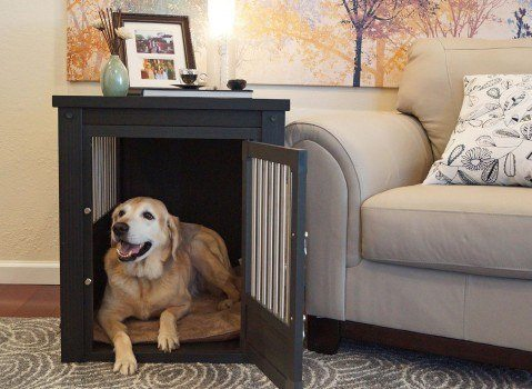 New age pet Ecoflex crate in a living room with a picture frame on top and golden retriever inside