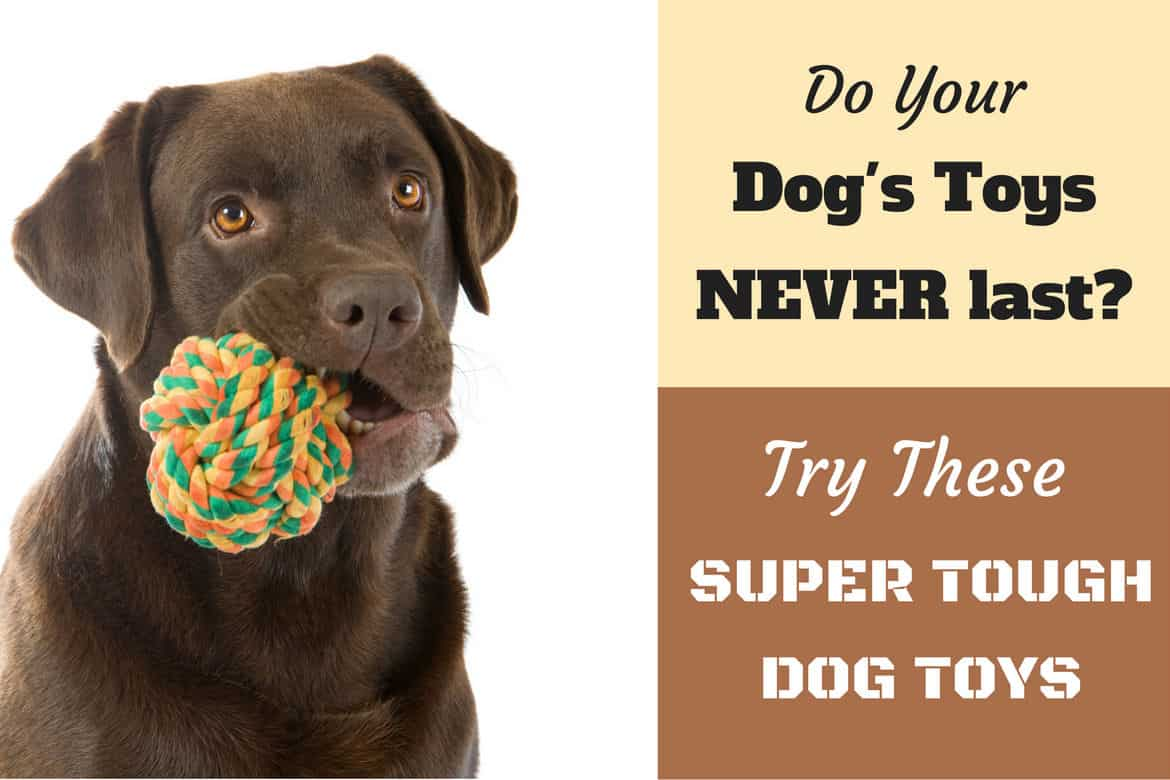 tough stuffed dog toys