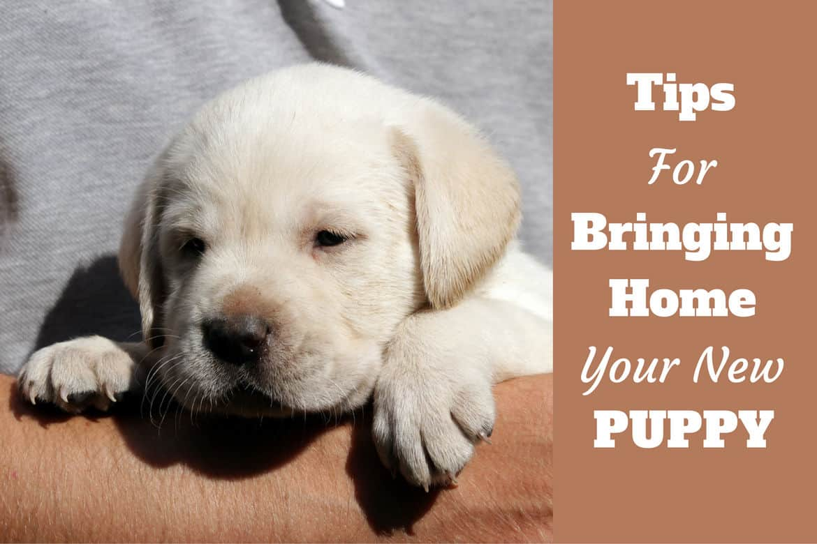 New Puppy Checklist (Preparing Your Home for Getting a Dog)
