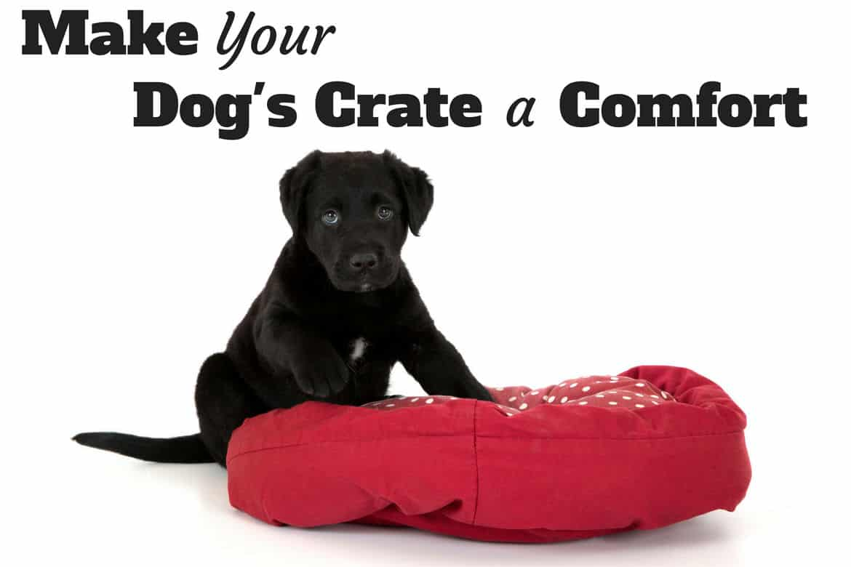 A black labrador puppy on a dog bed