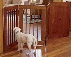 A Yellow Labrador puppy standing behind a wooden pet barrier