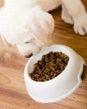 A puppy eating his food from a white bowl