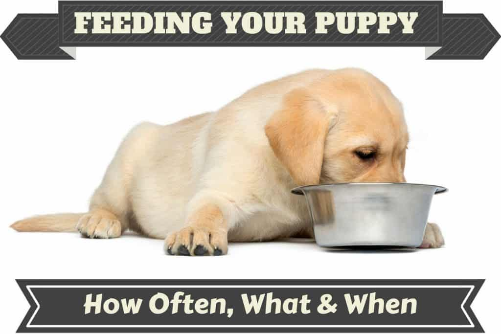 How Much Dog Food Should A Puppy Eat