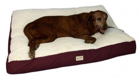 A choc lab resting on an Amarket dog bed
