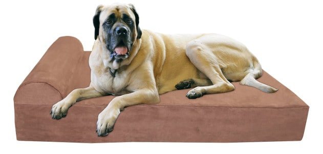 Great Dane resting on a big barker dog bed isolate don white