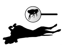A silhouette of a dog on it's back and a flea in a magnifying glass