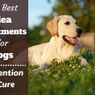 What is The Best Flea Treatment For Dogs?