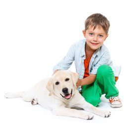 Little boy kneeling with his Labrador puppy on white background