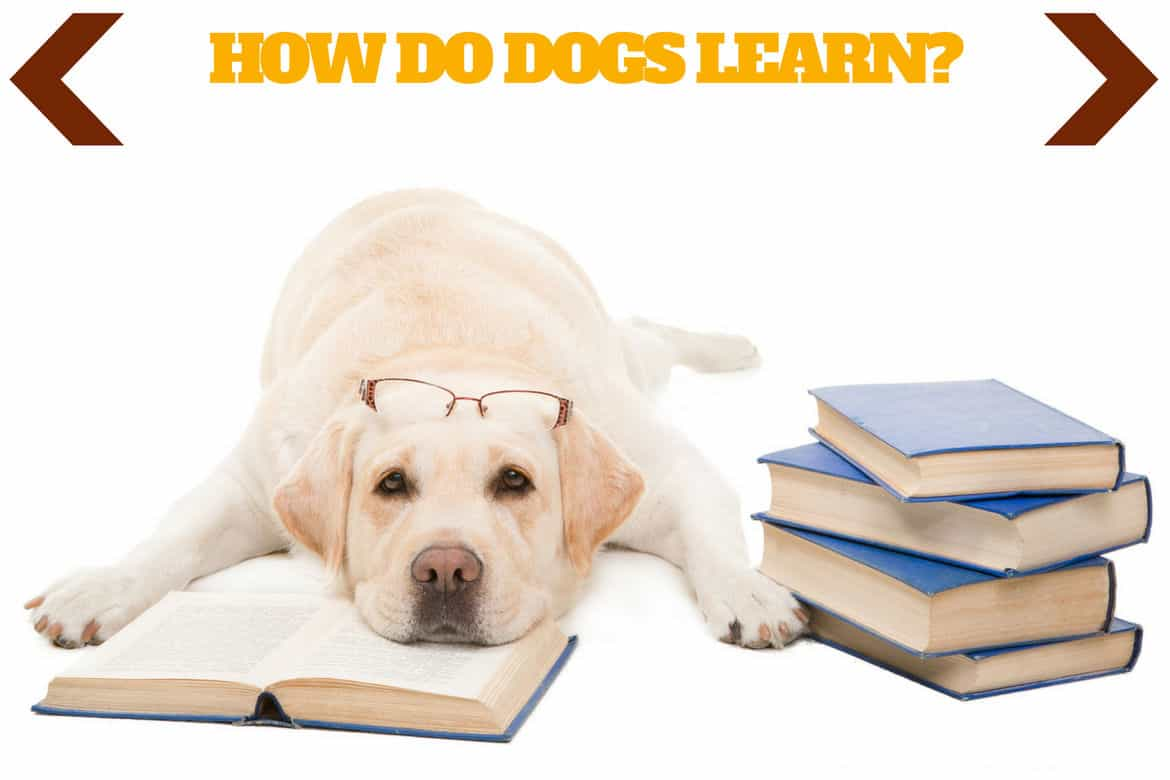 How do dogs learn written above a yellow labrador lying on an open book