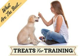 Best treats for training written beside a sitting girl treating a sitting puppy