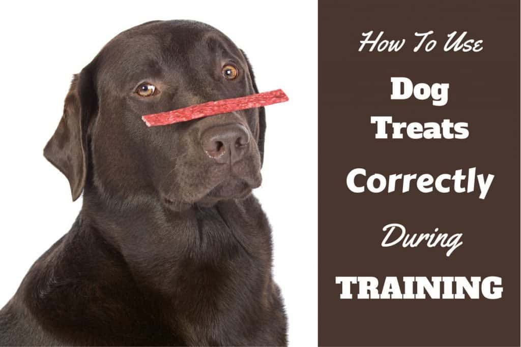 How To Naturally Treat Mast Cell Tumors In Dogs