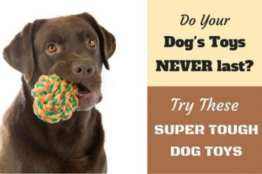 A chocolate lab with a rope knot durable dog toy in it's mouth