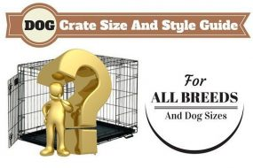 Dog crate size guide written above a gold man and question mark in front of dog crate