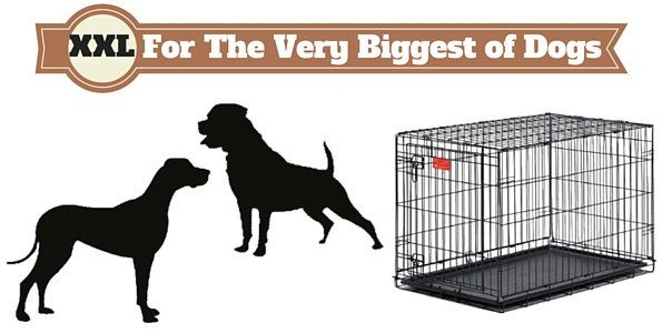 Silhouette of rottweiler and great dane next to XXL dog crate