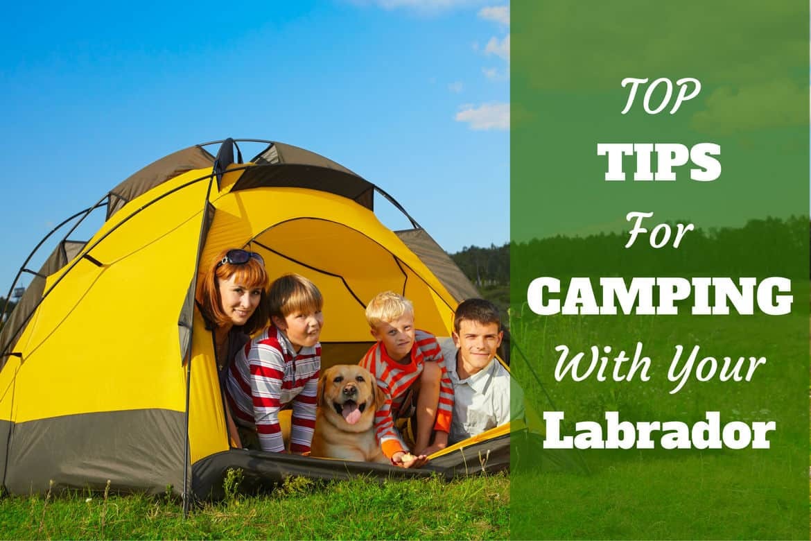 A family of 4 camping inside a yellow tent with their Labrador
