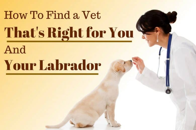 How to find a vet written beside a veterinary nurse feeding a lab puppy on a white table