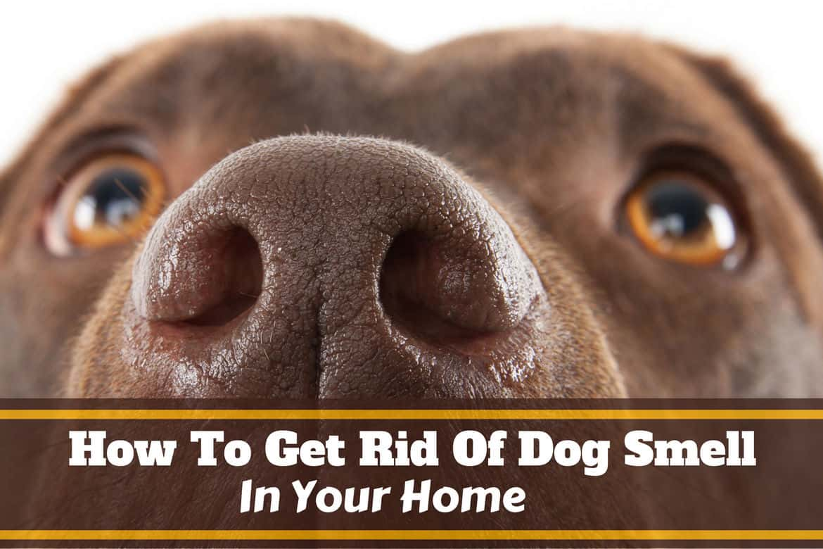 how-to-get-rid-of-dog-smell-1.jpg