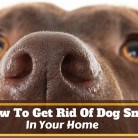 How To Get Rid Of Dog Smell In Your Home