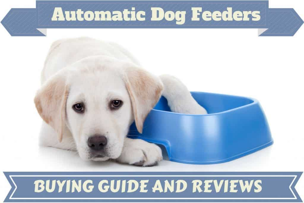 Best Automatic Dog Feeder Reviews Top Picks For 2019