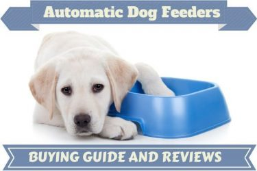 Best automatic dog feeder written beside a hungry lab with paw in empty bowl