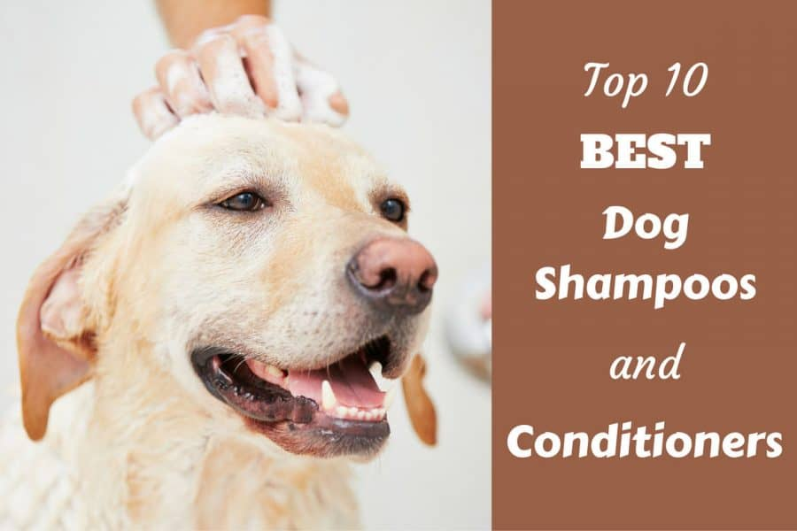 Top 10 Rated Best Dog Shampoo And Conditioners