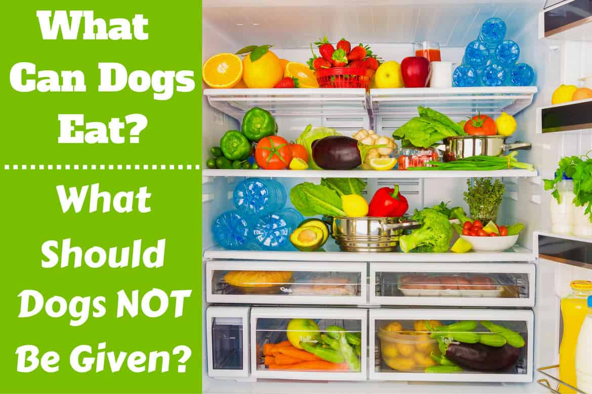What can dogs eat written beside a fridge full of food